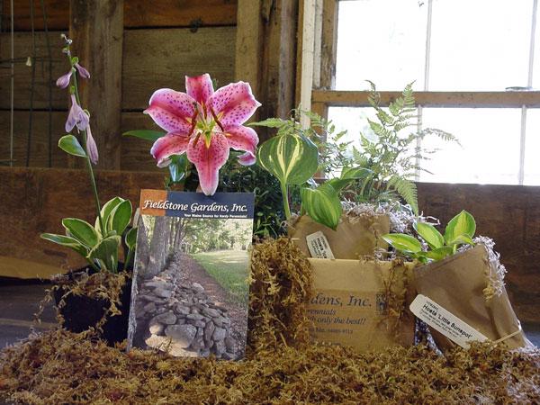 Fieldstone Gardens Hardy Perennials Mail Order Nursery Plant Catalog